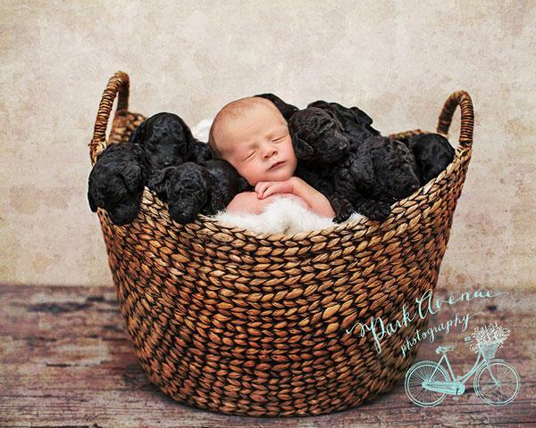 perierga.gr - Nεογέννητο μωρό με τα... κουτάβια του!