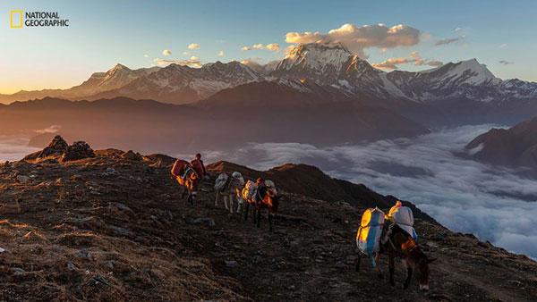 perierga.gr - Φωτογραφίες από τον ετήσιο διαγωνισμό του National Geographic