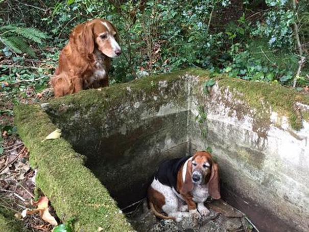 perierga.gr - Σκυλίτσα φύλακας-άγγελος για τη φίλη της!
