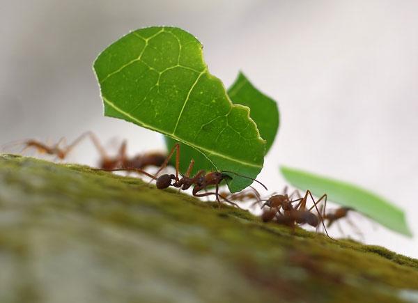 perierga.gr - Τα περισσότερα μυρμήγκια-εργάτες «στην πραγματικότητα λουφάρουν»!