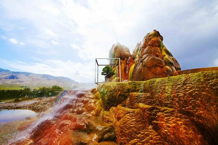 perierga.gr - To ταξίδι ενός μπονσάι ανά την υφήλιο!