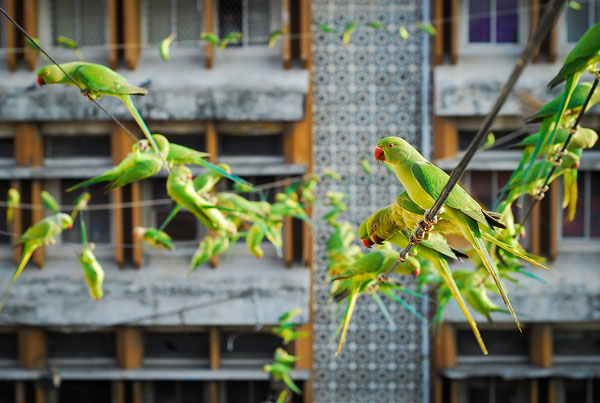 perierga.gr - Ταΐζει 4.000 παπαγαλάκια στη βεράντα του!