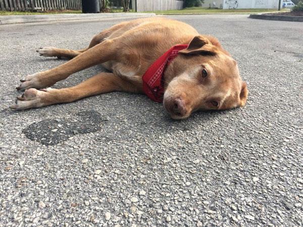 perierga.gr - Πιστός σκύλος έμεινε για ώρες στο σημείο που σκοτώθηκε η ιδιοκτήτριά του!