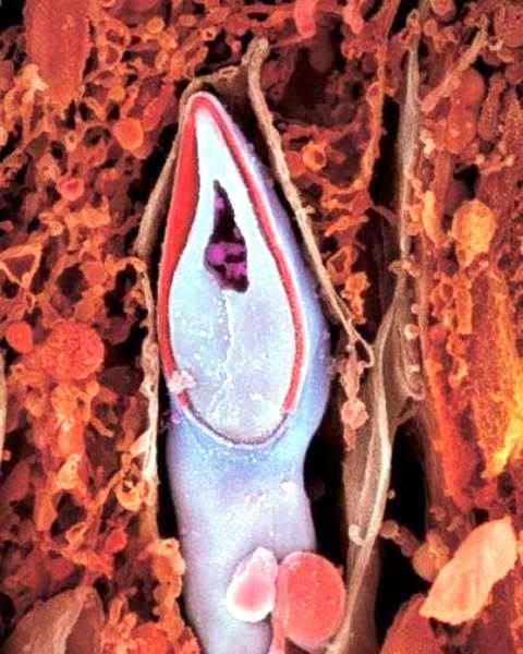 perierga.gr - Το ταξίδι ενός ανθρώπινου εμβρύου σε εικόνες!