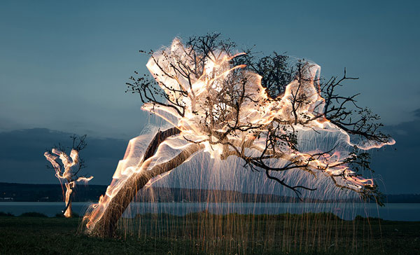 perierga.gr - Τα δέντρα φωτίστηκαν στη Βραζιλία!