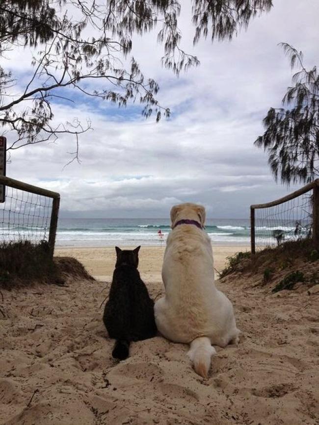 perierga.gr - H γάτα και ο σκύλος μπορούν να γίνουν καλοί φίλοι!
