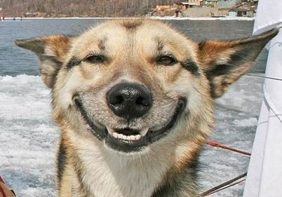 perierga.gr - Απίθανος σκύλος... χαμογελάει στις φωτογραφίες!