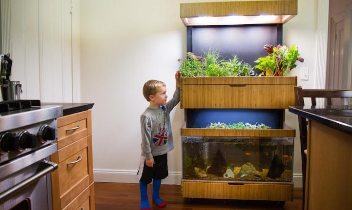 """perierga.gr - """"Έξυπνος"""" κήπος μέσα στο σπίτι για φρέσκα λαχανικά!"""