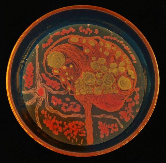perierga.gr - Έργα τέχνης σε τριβλία Πετρί από... μικρόβια!