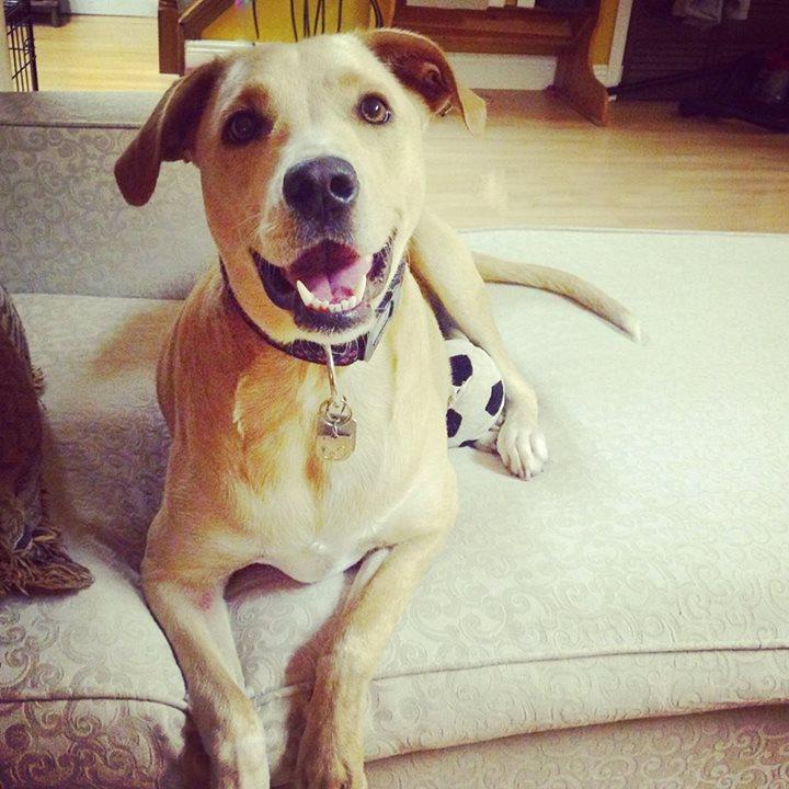 perierga.gr - Το πιο θλιμμένο σκυλί του κόσμου βρήκε αγκαλιά και έσκασε χαμόγελο!