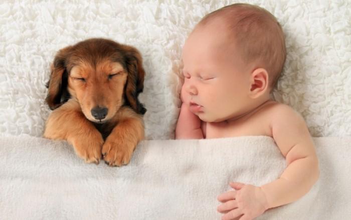 perierga.gr - Ο σκύλος προστατεύει τα παιδιά από το άσθμα