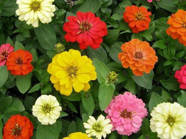 perierga.gr - Στον Διεθνή Διαστημικο Σταθμό φυτεύουν για πρώτη φορά λουλούδια