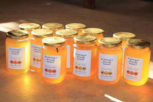 perierga.gr - Πρωτότυπο πρόγραμμα Ελεφάντων και Μελισσών!