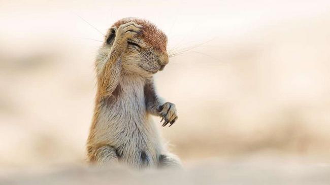perierga.gr - Αστείες φωτογραφίες άγριας ζωής!
