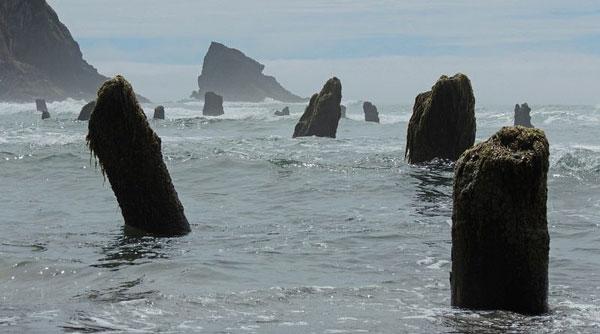 perierga.gr - Δάσος-φάντασμα... αναδύθηκε από τη θάλασσα!