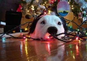 perierga.gr - Ο στολισμός του δέντρου είναι... σκυλίσια υπόθεση!