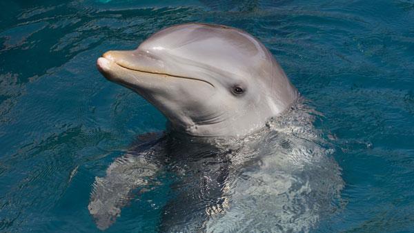 perierga.gr - Πώς μας βλέπουν τα δελφίνια;