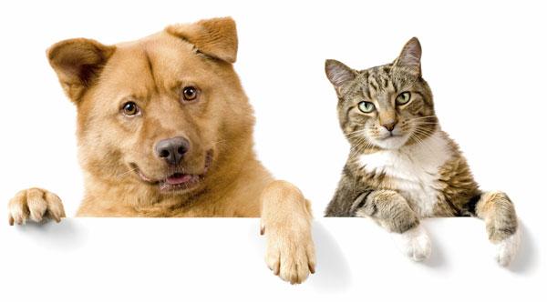 perierga.gr - Μακροβιότερες οι γάτες από τους σκύλους!