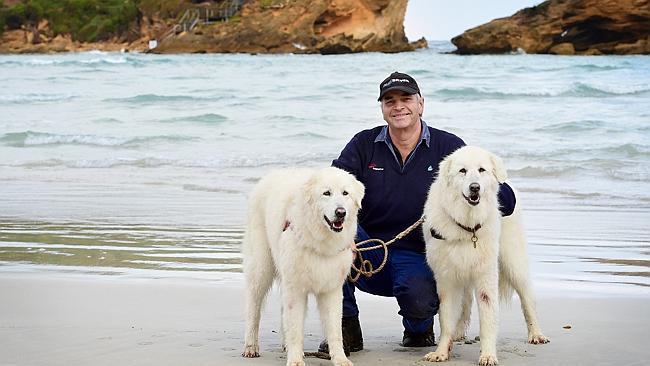 perierga.gr - Τετράποδοι φύλακες-άγγελοι μικρών πιγκουίνων σε νησί της Αυστραλίας!
