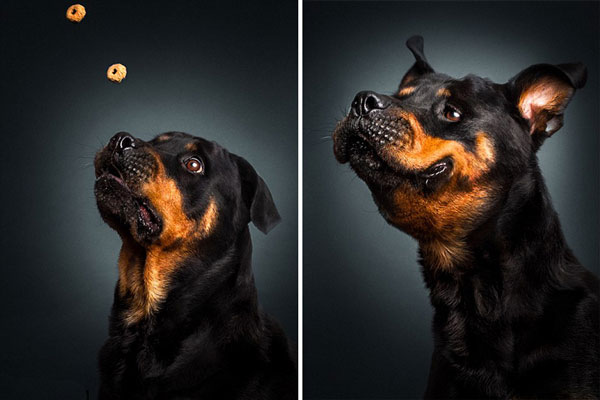 perierga.gr - Φωτογραφίες σκύλων την ώρα που πιάνουν το φαγητό τους στον αέρα!