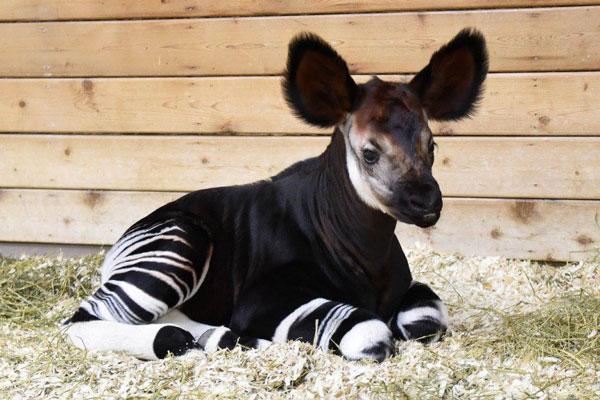 perierga.gr - Tα πιο χαριτωμένα νεογέννητα ζωάκια του 2015!