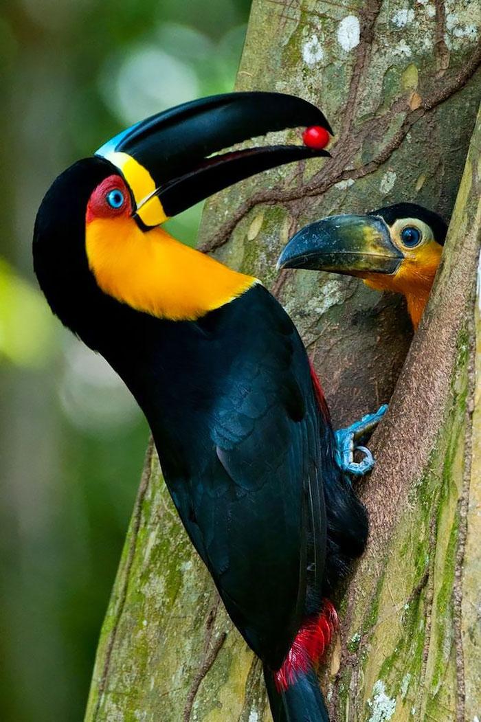 perierga.gr - Αξιαγάπητα πτηνά φροντίζουν τα μωρά τους!