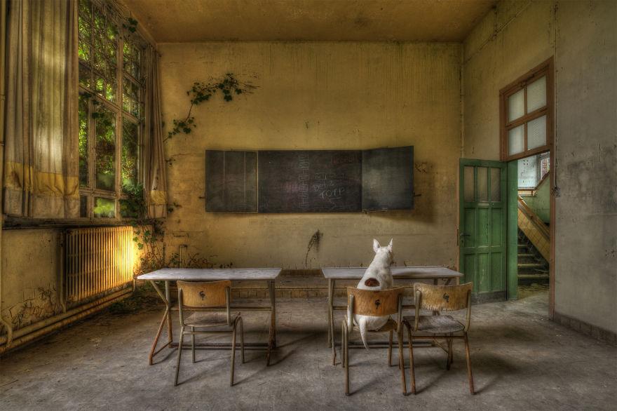 perierga.gr - Σκύλος ποζάρει σε εγκαταλειμμένα μέρη!