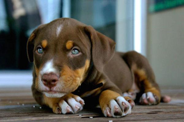 perierga.gr - Ασυνήθιστες διασταυρώσεις σκύλων!