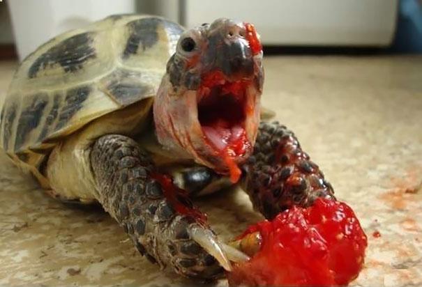 perierga.gr - Ζώα απολαμβάνουν το φαγητό με το δικό τους τρόπο!