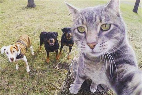 perierga.gr - Γάτα βγάζει... selfie με τρεις σκύλους!