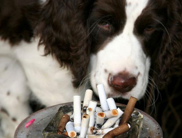 perierga.gr - Το παθητικό κάπνισμα βλάπτει τα κατοικίδια