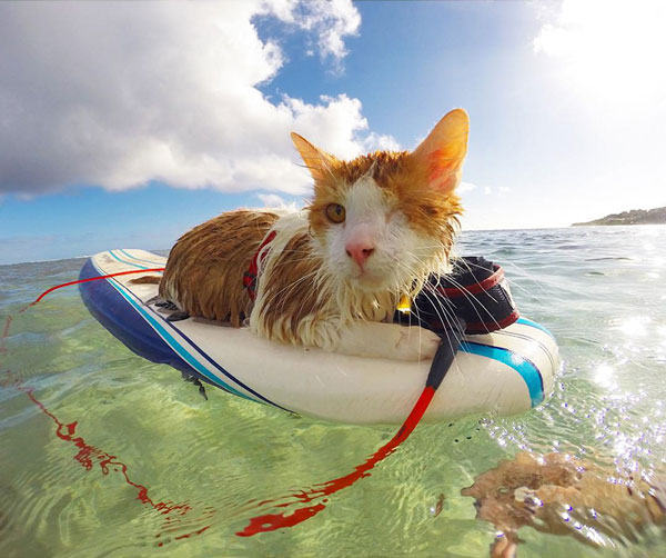 perierga.gr - Mονόφθαλμος γατούλης δαμάζει τα κύματα!