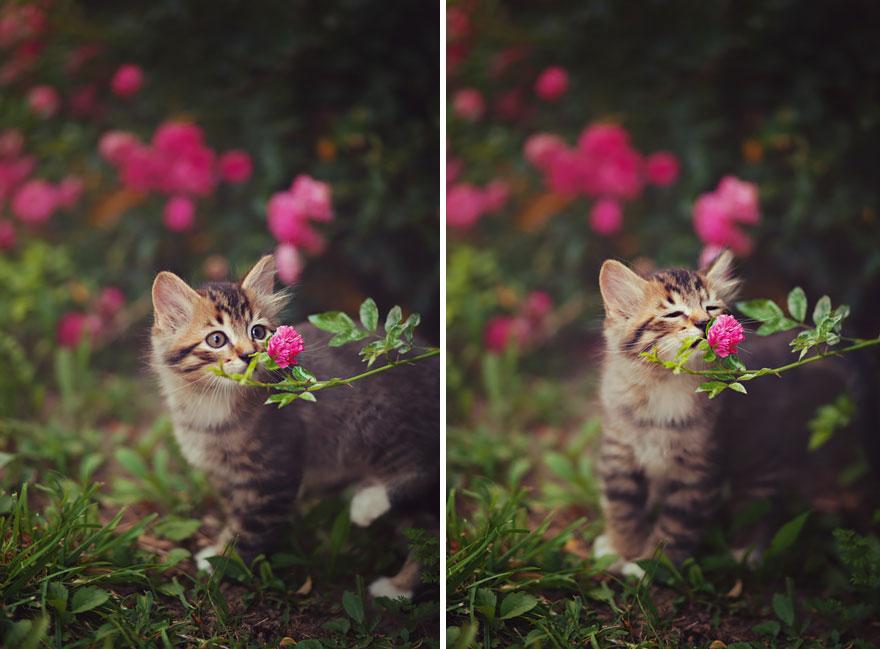 perierga.gr - Αξιολάτρευτα ζώα μυρίζουν λουλούδια