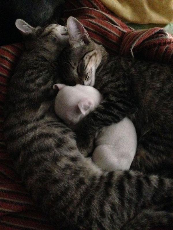 perierga.gr - Γάτες υιοθέτησαν ανάπηρο κουταβάκι!