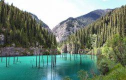 perierga.gr - Βυθισμένα δάση στον κόσμο!