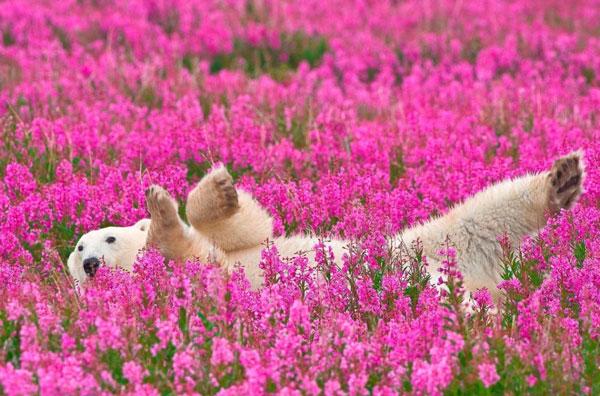 perierga.gr - Ζώα δείχνουν την αγάπη τους στην άνοιξη!