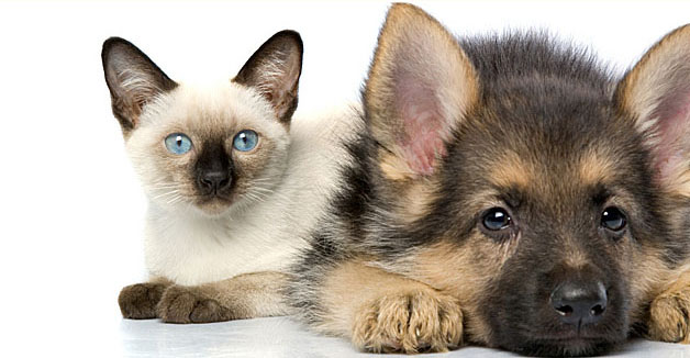 perierga.gr - Τα σκυλιά ή οι γάτες μάς αγαπάνε περισσότερο;