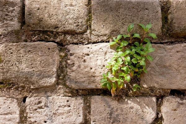 perierga.gr - Μοναχικά φυτά στον κόσμο!