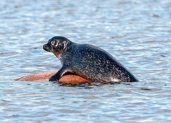 perierga.gr - Η πιο ευτυχισμένη φώκια στον κόσμο!