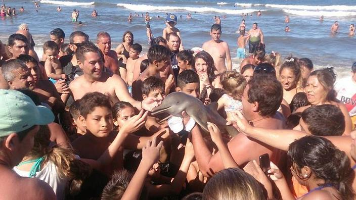 perierga.gr - Τουρίστες σκότωσαν μωρό δελφίνι για μια selfie!