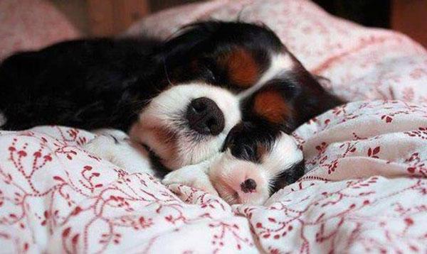 perierga.gr - Οι σκυλίτσες λατρεύουν τα κουτάβια τους!