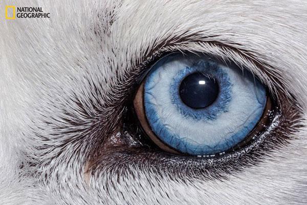 perierga.gr - Μέσα στα μάτια των ζώων από το National Geographic!