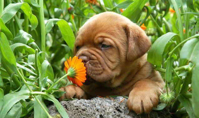 perierga.gr - Πώς μυρίζουν τα ζώα;
