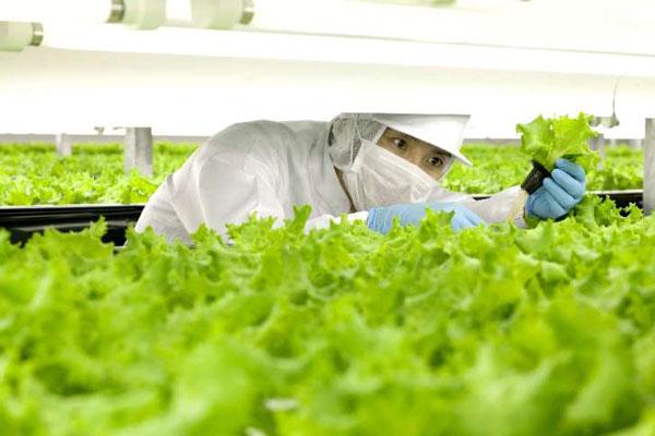 perierga.gr - Tο πρώτο πλήρως αυτοματοποιημένο αγρόκτημα στον κόσμο!