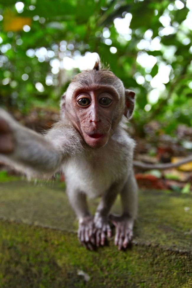 perierga.gr - Ζώα βγάζουν... selfies!