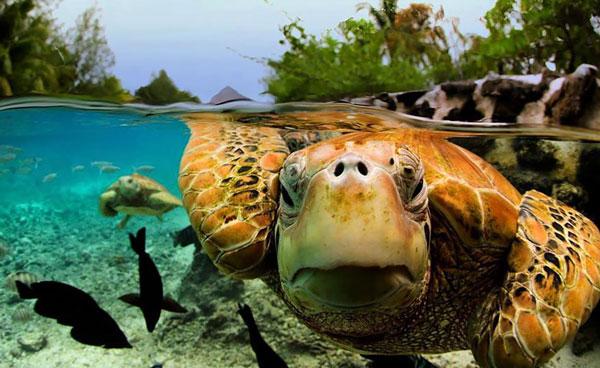 perierga.gr - Απίθανες εικόνες πάνω και κάτω από το νερό!