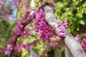 perierga.gr - Τα λουλούδια της άνοιξης ανθίζουν σε ένα βίντεο!