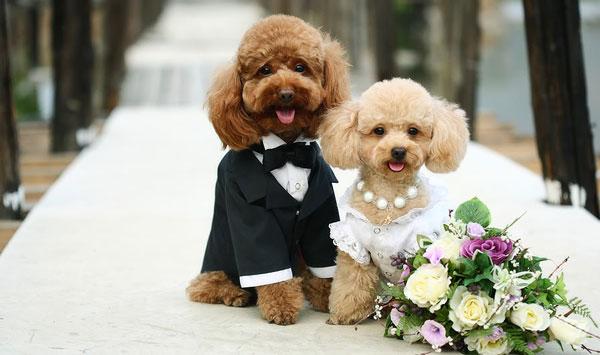 perierga.gr - 5.000 καλεσμένοι σε γάμο σκύλων!
