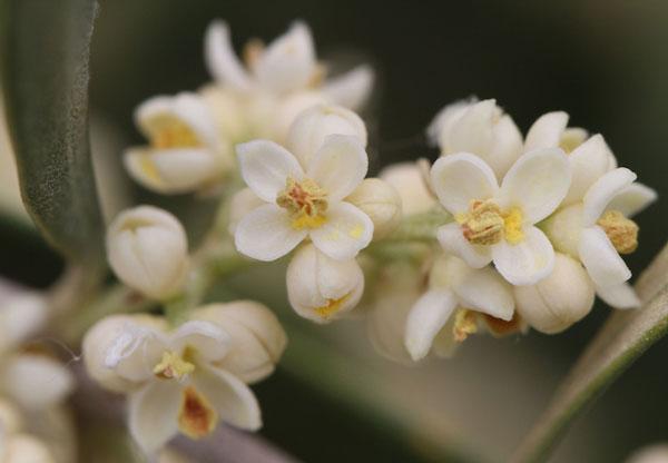 perierga.gr - Όμορφα άνθη γνωστών καρπών!