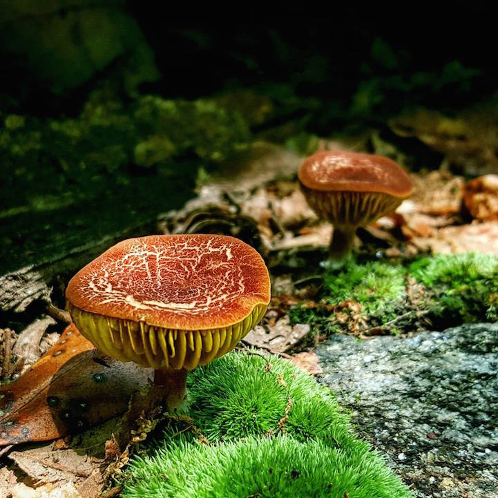 perierga.gr - H εντυπωσιακή ομορφιά των εξωτικών μανιταριών!